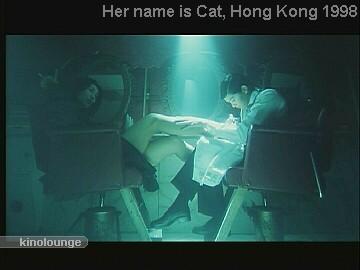 Cat 017