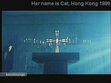 Cat 082